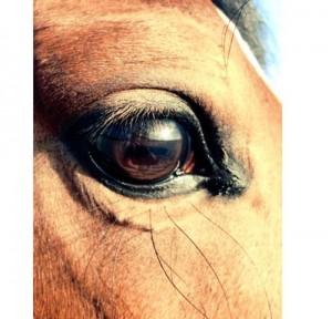 Det finns ju inga djur som är så mysiga som hästar.